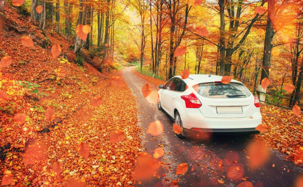 Car driving on scenic road with Fall leaves everywhere